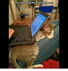 Cat Laptop Meme - wthe the laptop was there before the cat cats meme on sizzle