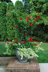 container planting design dirt simple