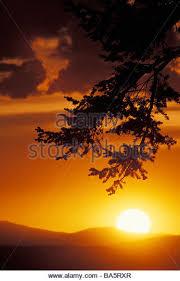 douglas fir tree stock photos douglas fir tree stock images alamy