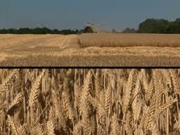chambre agriculture seine et marne seine et marne agriculture et forêts