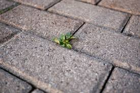 brick patios do they really need to be sealed masonrysaver com