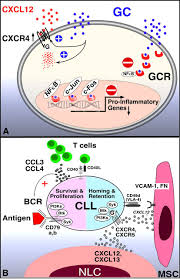 coming full circle 70 years of chronic lymphocytic leukemia cell
