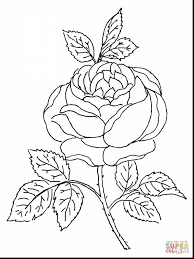 astonishing sonic amy rose coloring pages with rose coloring page
