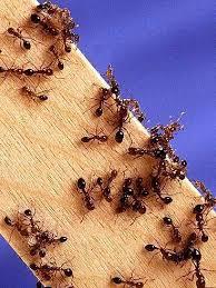 chasser les moucherons dans la cuisine de moucherons dans la cuisine que faire