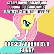 Mlp Fluttershy Meme - my little pony friendship is magic brony rabbits are her