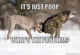 Pooping Memes - dog poop memes turtleboy