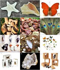 where to buy seashells where to buy materials seashells feathers butterflies