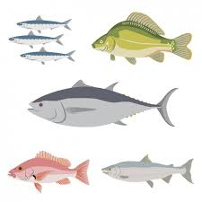 fish vectors photos psd files free download