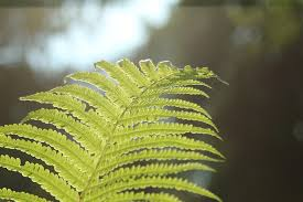 Free Picture Leaf Nature Fern Free Photo Leaf Flora Nature Fern Outdoors Free Image On