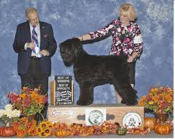 dogs 101 affenpinscher animal planet black russian terriers traditional dogs exceptional quality