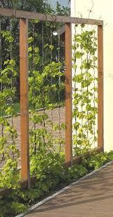 kletterpflanzen fã r balkon die besten 25 sichtschutz ideen auf outdoor