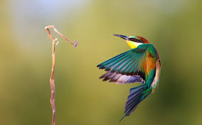 bird wallpapers awesome bird wallpaper 41738 1680x1050 px hdwallsource com
