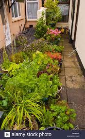 Small Urban Garden - small urban garden growing flowers shrubs and salad crops in stock