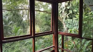 bocas toro hotels rentals in panama monkey tree bocas