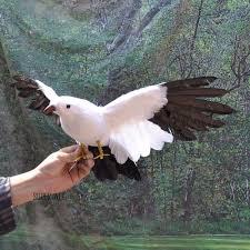 online get cheap taxidermy birds aliexpress com alibaba group