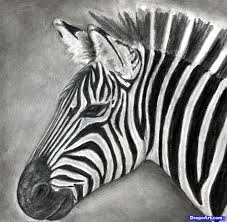 draw zebra for kids step