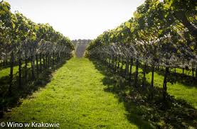 krakow vineyard escapades puro hotels