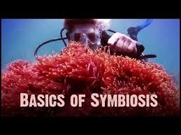 symbiosis ck 12 foundation