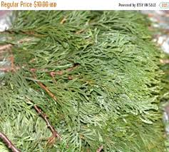 z gallerie black friday sale 17 best stuff made from branches images on pinterest curly