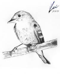 bird sketches pencil pencil art drawing