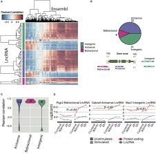 frontiers dynamic expression of long noncoding rnas and repeat