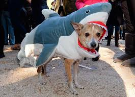 White Dog Halloween Costume 60 Horribly Hilarious Halloween Costumes Cute Pets