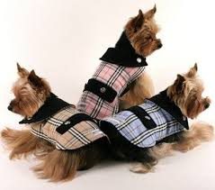 Image detail for spoof on burberry dog coats this is furberry