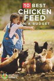 26 cheap yet nutritious chicken feed that won u0027t break your wallet