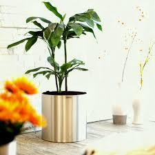 decorative indoor plants plant stand modern rustic floor decorative for plants indoor outdoor