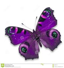 purple butterfly stock photos royalty free images