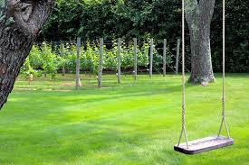 Hamptons Epicure My Backyard Winery Is A BucketYours - Backyard vineyard design