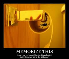 Toilet Paper Roll Meme - spider in toilet paper roll pics demotivational poster critters