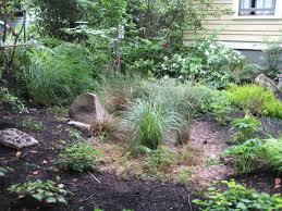 native plants of pacific northwest create a rain garden in your yard the bioswales keep pollutants