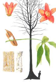 trees commonly cultivated in southeast