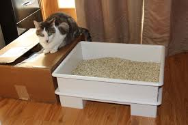 How To Live In A Small Space How To Live In A Small Space With A Pet Avoid Dirt And Smells