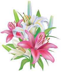 lilies flowers lilies flowers decoration png clipart image gallery