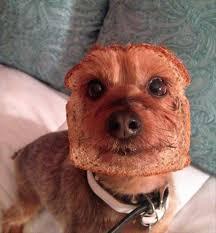 Funny Dog Face Meme - funny dog thinking face funny pics story