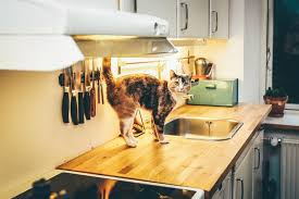 cuisine pratique et facile electroménager pratique pour votre cuisine aspirateursbalai com