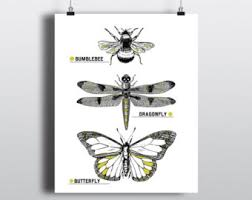 insects poster etsy