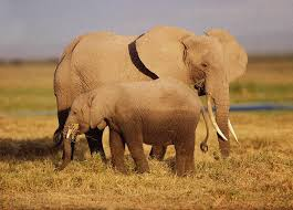 Blind Men And The Elephant Story For Children Top 10 Animal Moms Animal Planet