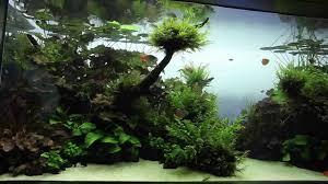 visite live planted aquarium aquascape par aqua design amano