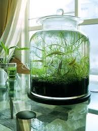 60 adorable spring terrariums for home décor цветы blumen