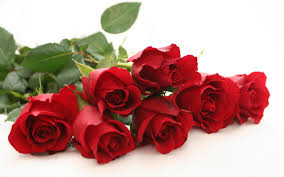 rose image free download clip art free clip art on clipart