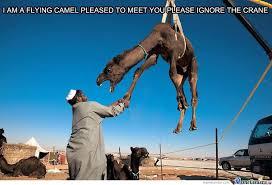 Camel Memes - i m a flying camel by ben meme center