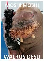 Moshi Moshi Meme - moshi moshi walrus desu by dark sensei on deviantart