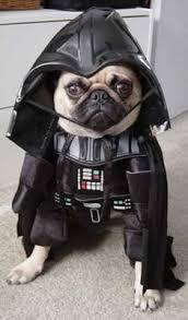 Darth Vader Halloween Costume Halloween Costume Dogs