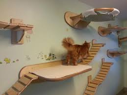 Wall Shelves For Cats This Furniture Gives New Meaning To The Term U0027ceiling Cat