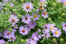 Summer Flowers For Garden - fafardflowers for honey bees