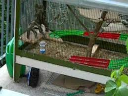 gabbie scoiattoli accoppiamento tamia scoiattoli giapponesi