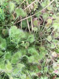 native plant nursery bog excursion at oswego lake u2014 refugia